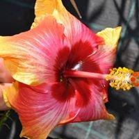 Plantes tropicales Mallet-Daubas à Hyères-Almanarre