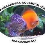 Barbarossa Aquarium Club de Haguenau