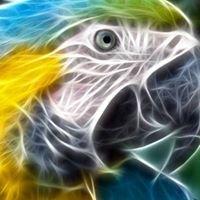 Aldo's Exotic Birds