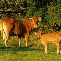 Vente à la ferme de viande de boeuf et de veau