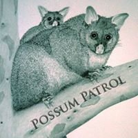 Possum Patrol Brisbane
