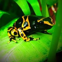 Dart Frogs and Habitats