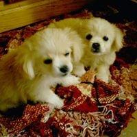 Amigos de los Perros de Carballo