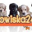 legowiska24