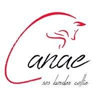 Associació Canae
