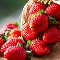 Wood's Strawberries