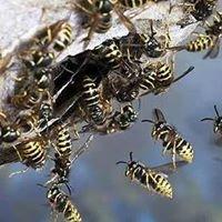 Fife Pest Control Services