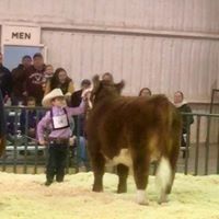 Day Show Cattle