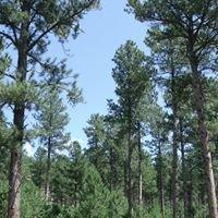 Black Hills Forest Resource Association