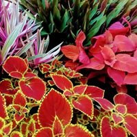Swanes Garden Care