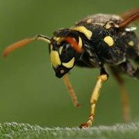 Pestway Services pest control