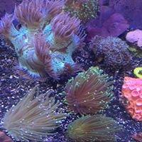 Niko's Reef