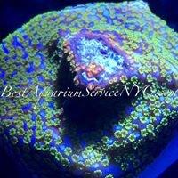Bestaquariumservicenyc.com