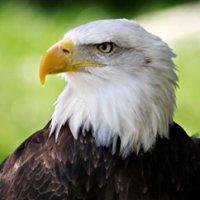 Green Eagle Grassing