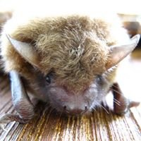 All About Bats & Wildlife, Inc.