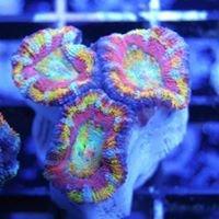 I Got Corals