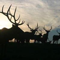 Krause Elk Farm