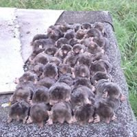 Cambridgeshire Mole Control