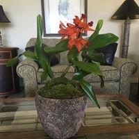 Dr Delphinium & Orchid House