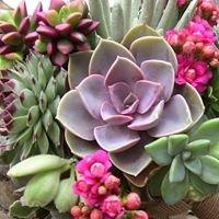 Simply Succulents Australia