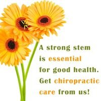Holly Springs Chiropractic