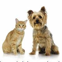 Kardinia Veterinary Clinic