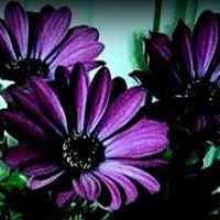 The Purple Flower, Domestic Violence Resource & Support