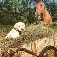 Rebel Horse Stables
