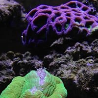 The Inland Reef