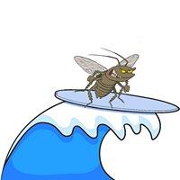 Caloundra Carpet Cleaning & Pest Control