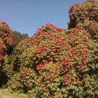 Kilmacurra Arboretum