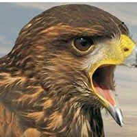 Hawkwise Pest Control LTD