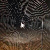Environ Pest Services