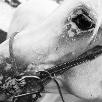 Itz R Turn Arabian Horse Farms