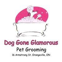 Dog Gone Glamorous