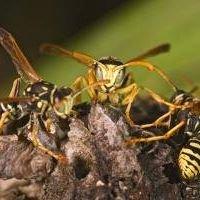 AE Pest Control