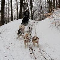 Mountain-Side Huskies