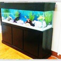 Fishy Business Aquariums
