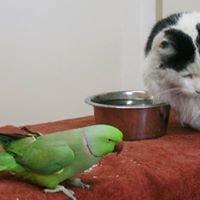 Windhoek Veterinary Clinic cc