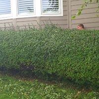 Olson's Lawn Service Plus