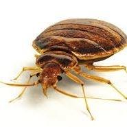 Bed Bug Pest Control London
