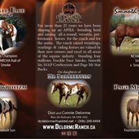 Delorme Ranch and South Shadow Angus, APHA and AQHA Horses