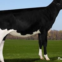 Fricosons Holsteins