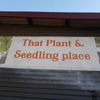That plant and seedling place