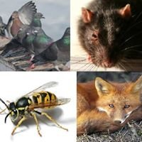 Essex Advisory Pest Control