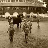 Schick Haefner Cattle Company