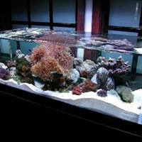 ZeroEdge Rimless Aquarium Builders