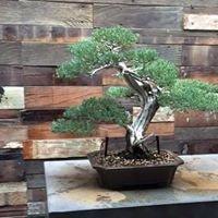 Kimura Bonsai and Landscape Nursery
