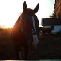 Caledon Equestrian School