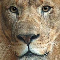 Pine Level Lions Club